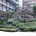 ホテルオークラの庭2