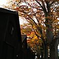 紅葉と山居倉庫